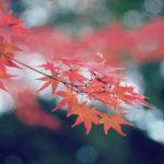 宮島・紅葉谷公園の紅葉2017!見ごろは?見どころは?もう1つのおすすめスポット!